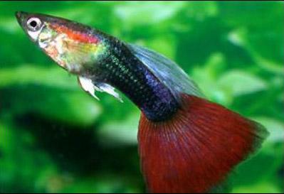 About leticia place for Manual de peces ornamentales